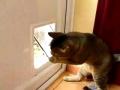 Obstáculo, palavra que não existe no dicionário felino