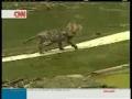 Gato sobrevive a terramoto na China