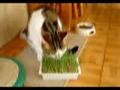 A comer ervinhas