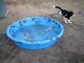 Com este calor, uma piscina é uma benção