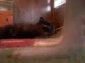 Cão enérgico e gato preguiçoso