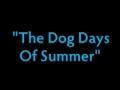 Verão: Passatempo canino