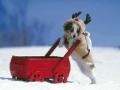 O Natal dos Cães