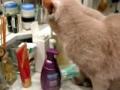 Gato pede para escovar dentes