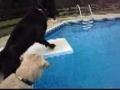 Cães brincam com bola na piscina