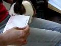 Coelho: A abertura fácil de cartas