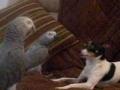 Cão quer brincar com Papagaios