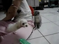 Arrufos: Como começam entre cães e gatos