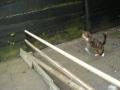 O Atleta Felino