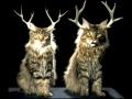 Os felinos desejam-lhe um Feliz Natal