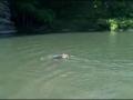 Um lago faz as delícias no Verão